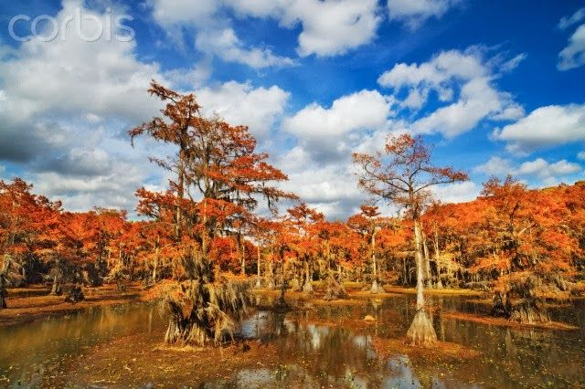 Autumn In A Cypress Swamp Along Louisiana S Gulf Coast Us Louisiana Pinterest