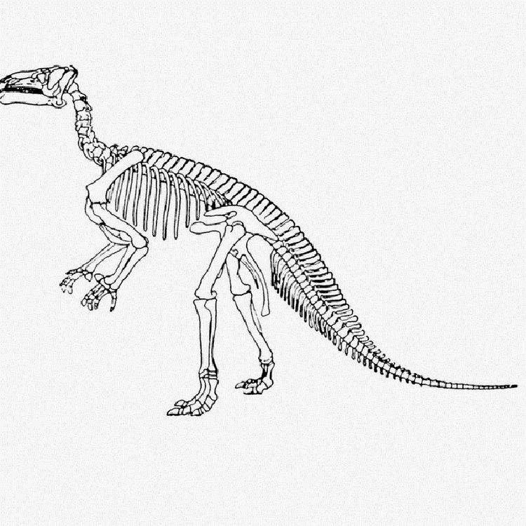 Coloring Pages Of Dinosaur Fossils For Kids Rhpinterest: Dinosaurs Fossils Coloring Pages At Baymontmadison.com