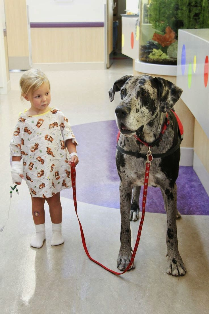5 Reasons To Use Service Dogs For Anxiety What Can T They Do