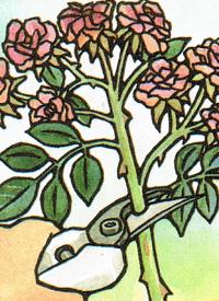rosenpflege h lt ihre rosen kr ftig gesund und attraktiv garten pinterest rosen garten. Black Bedroom Furniture Sets. Home Design Ideas