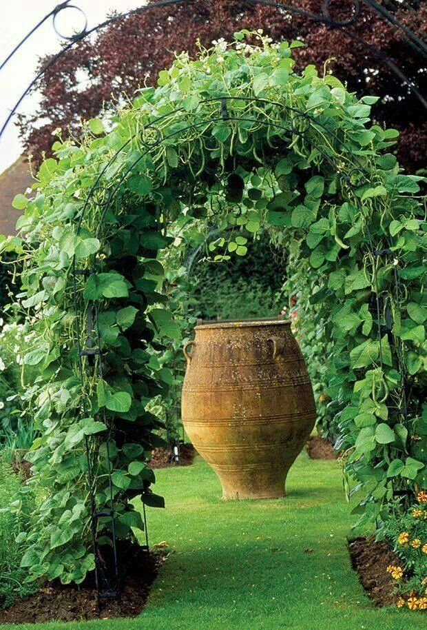 Green Bean Trellis Ideas Part - 49: I Want To Plant My Green Beans And Peas This Way. Beans Are Growing On This  Arbor. Hanging Down For Easy Pickinu0027. You Can Make A Vegetable Garden Look  ...