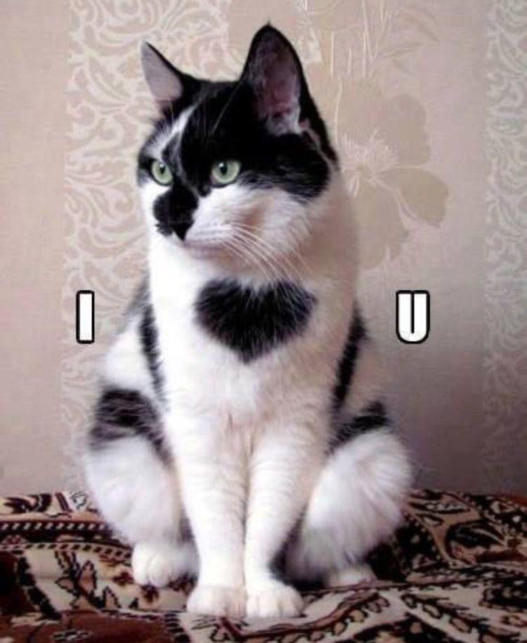 Pin Van Nathalie G Op Katten Gekke Katten Mooie Katten Grappige Katten