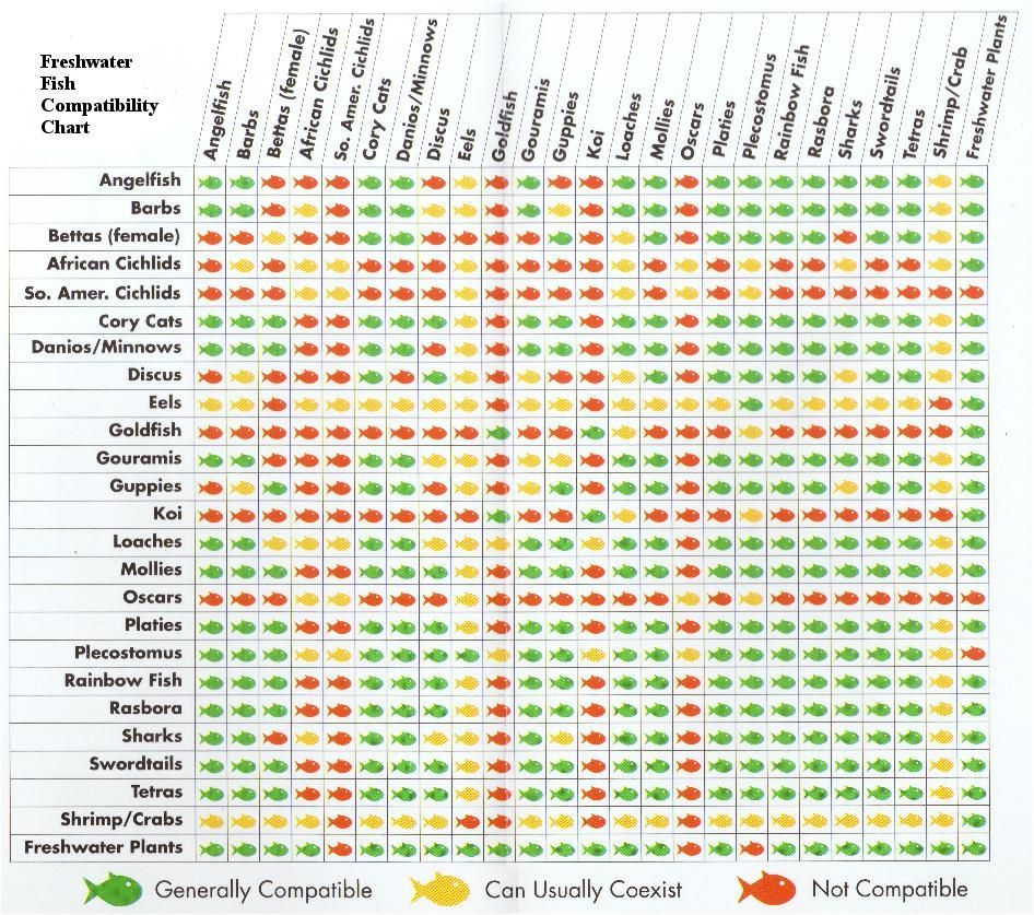 Freshwater Fish Compatibility Chart Aquariumfreshwaterfishwebsite Fish Chart Aquarium Fish Betta Fish Care