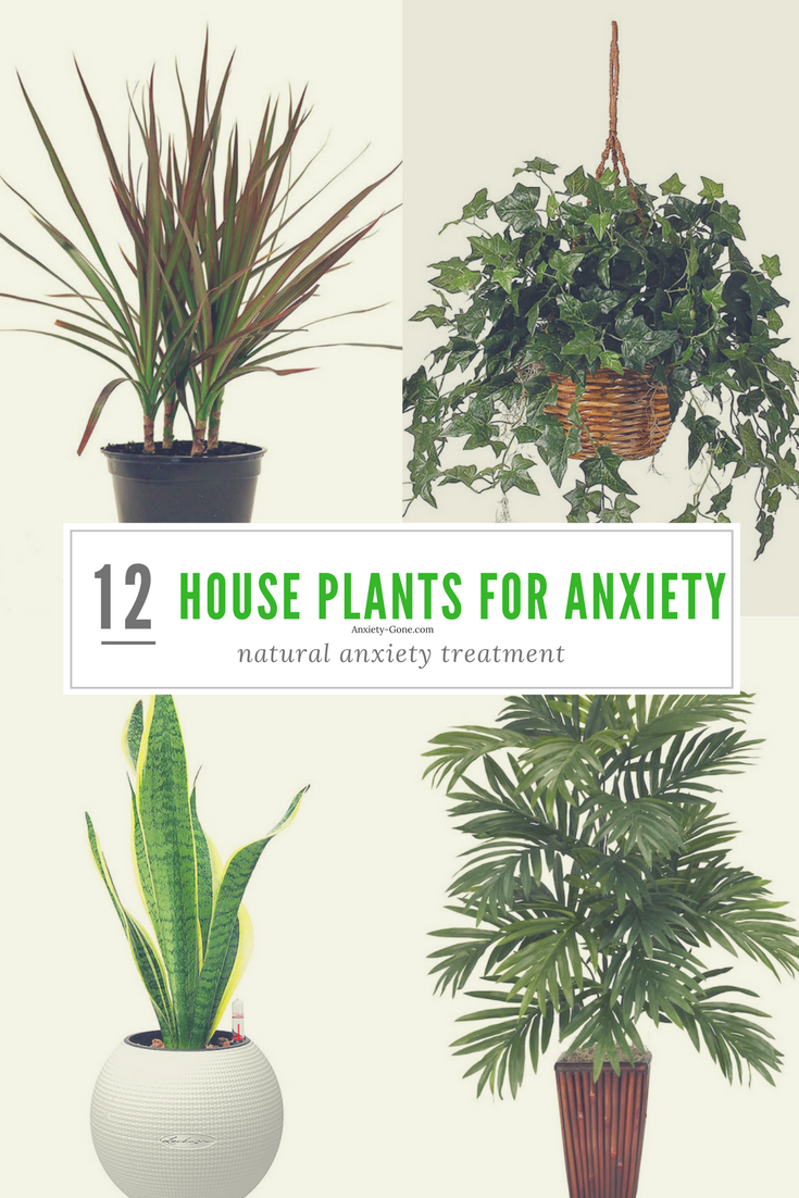 23 Powerful House Plants for Anxiety and Stress - Plants for Mental Health
