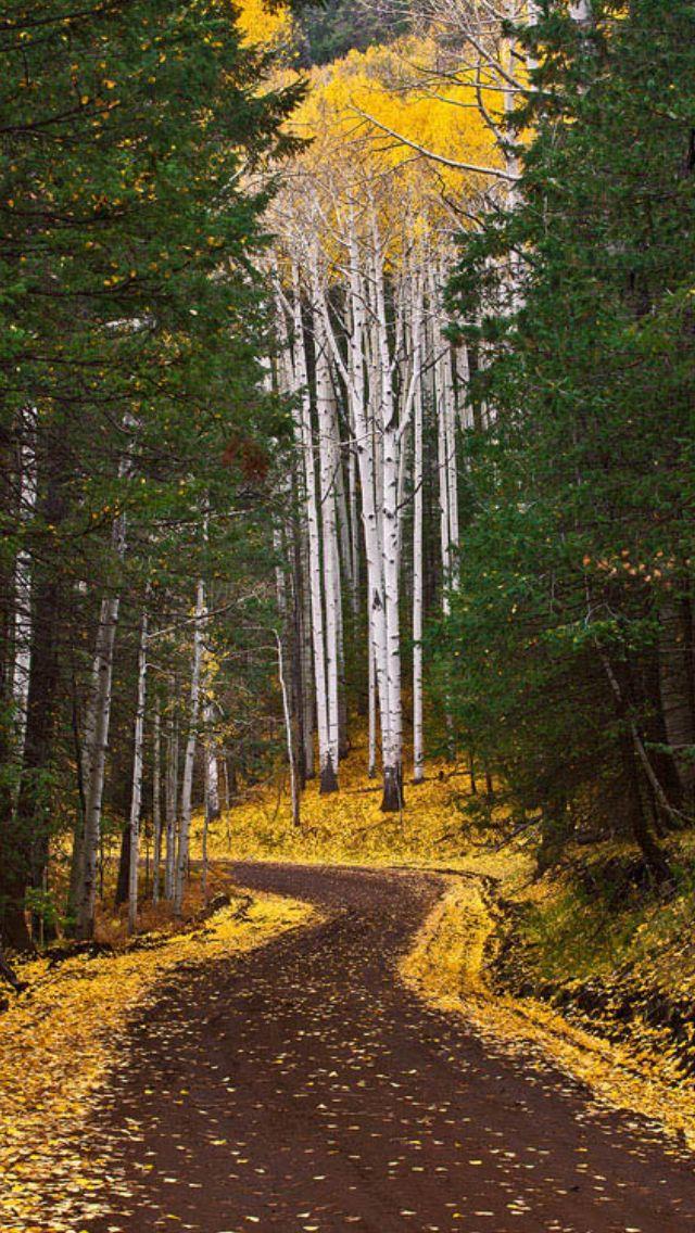 Autumn Road source Flickr.com