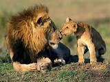 Não existe nada comparado ao amor de um pai com o filho