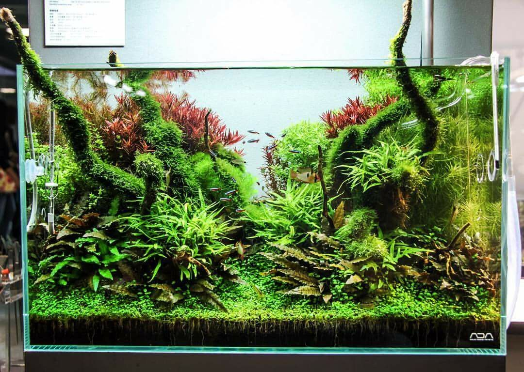 Pin by santiago salmon on aquarium nu vivarium pinterest