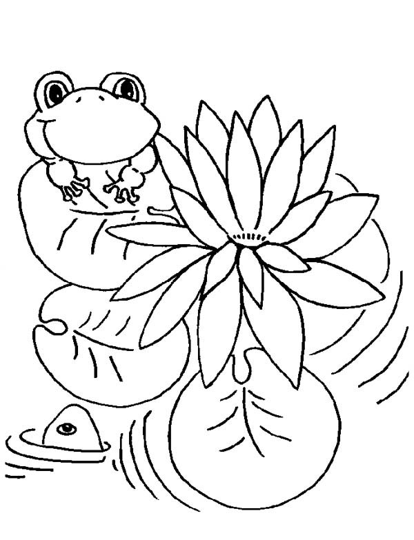 Lily Pad And Frog Coloring Page Color Luna Frog Coloring Pages Dinosaur Coloring Pages Animal Coloring Pages