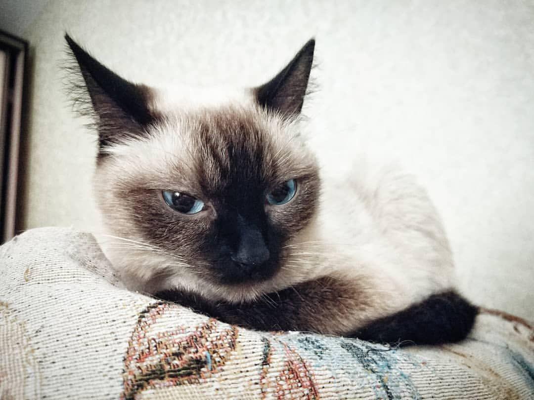 S Pitomcy Lenatim Lenatim Pets Instagram Posts Videos Stories On Picoji Com Komochek Dobra Kisa Kotenok Cats Cat Names Animals Beautiful Cats