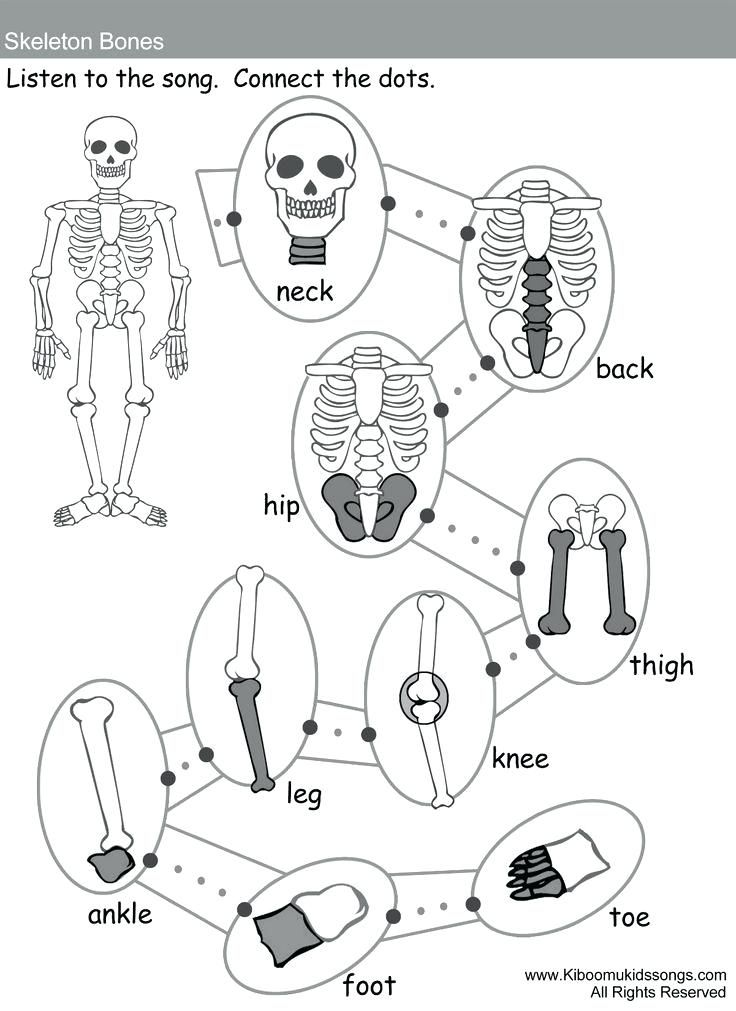 skeletal system kinder coloring page Google Search