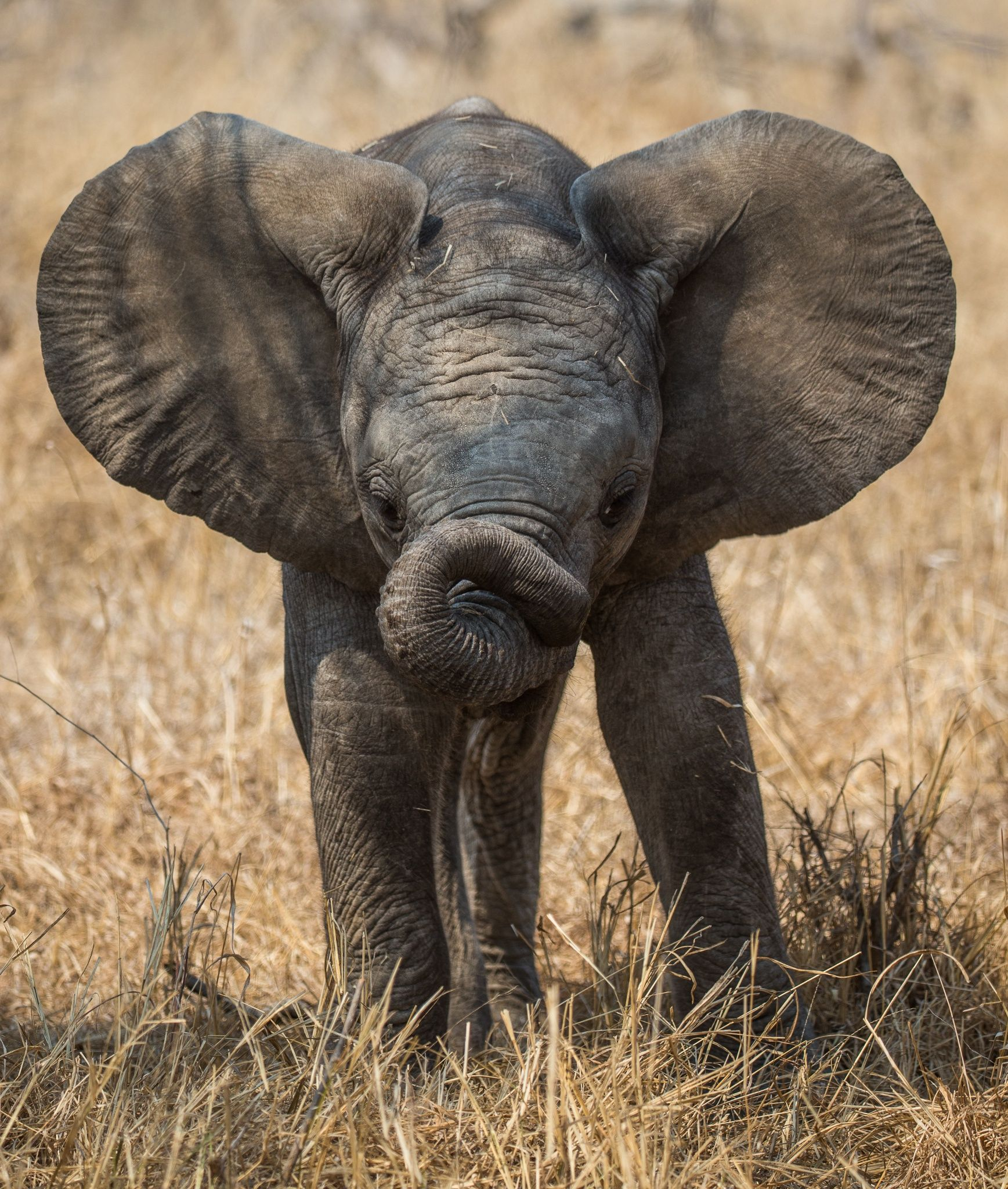Trunk trouble by Brian Scott on 500px