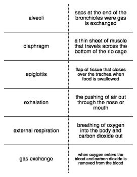 respiratory system vocabulary definitions