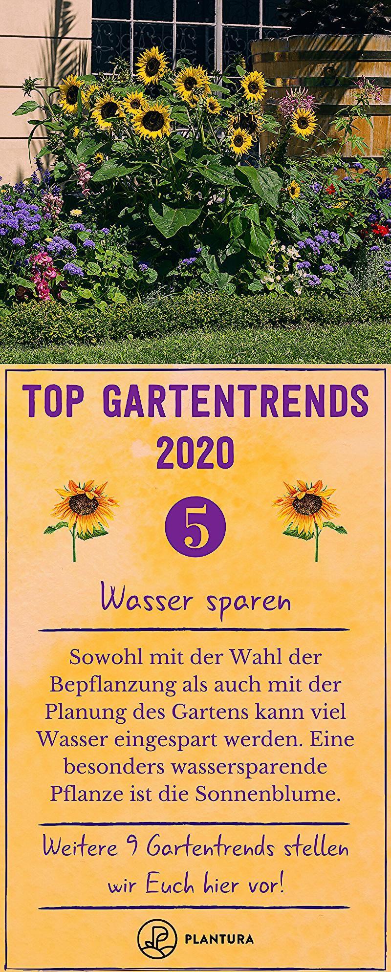 Top 10 Gartentrends 2020 – Wasser sparen