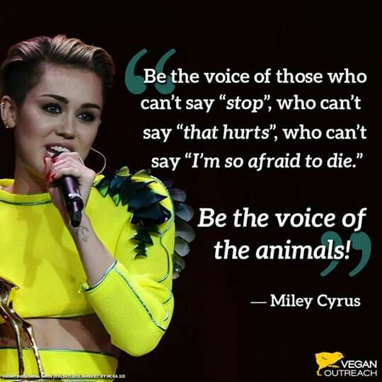 Be The Voice Of The Animals Courtesy Miley Cyrus Vegan With Images Vegan Memes Vegan Quotes Going Vegan