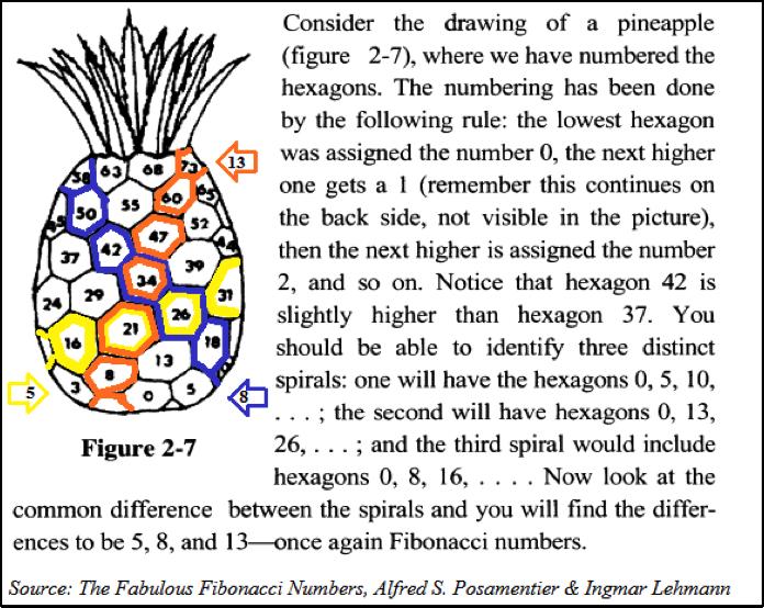 fibonacci sequence in pineapples fascinating appearances of the fibonacci numbers in nature. Black Bedroom Furniture Sets. Home Design Ideas