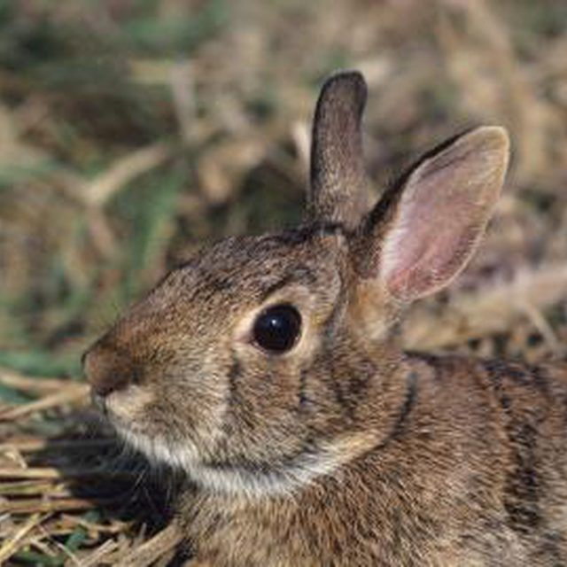 How to Get Rid of Rabbits Living Under Your Deck | Rabbit ...