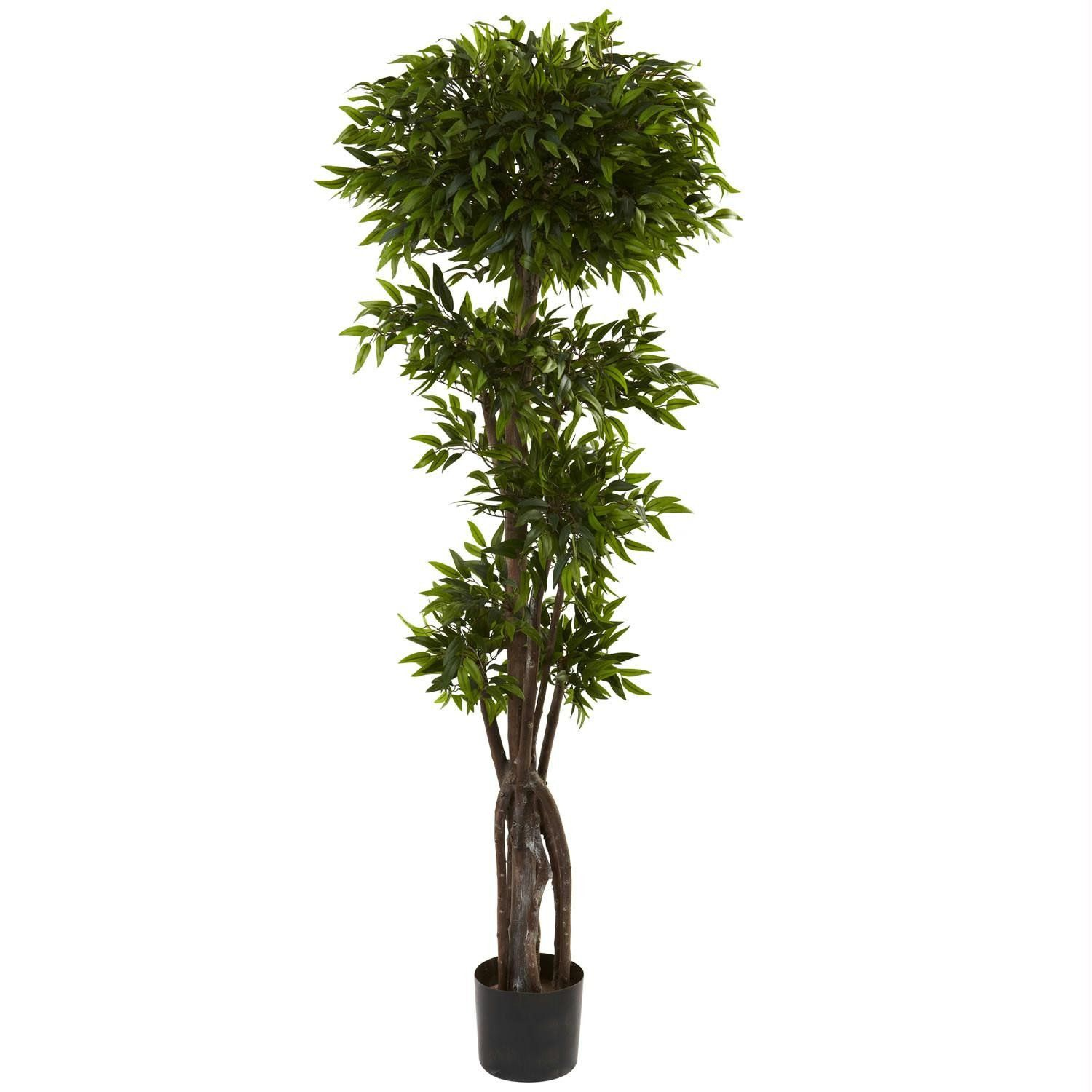 Ft ruscus tree products