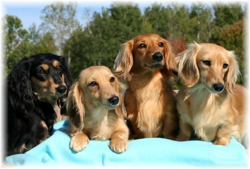 The Origin Of The Dachshund Yes Their Shape Had A Non Comedic