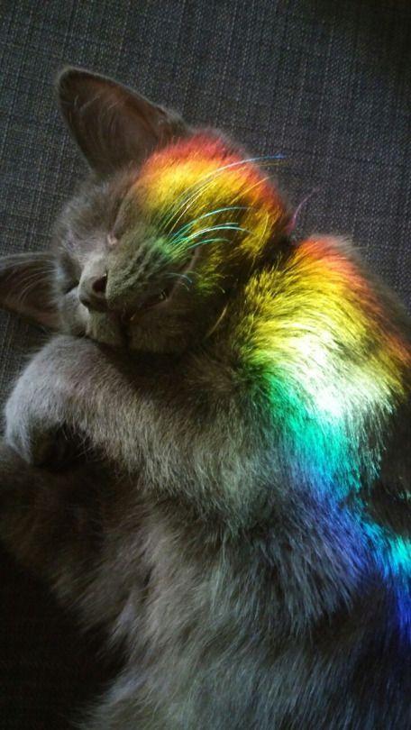Adorable kitten Loki fell asleep in the rainbow. Like my interest? Follow me o ... - Wolf & Mishka - #on # Adorable #follow #im #interteres ... - Mary's Secret World