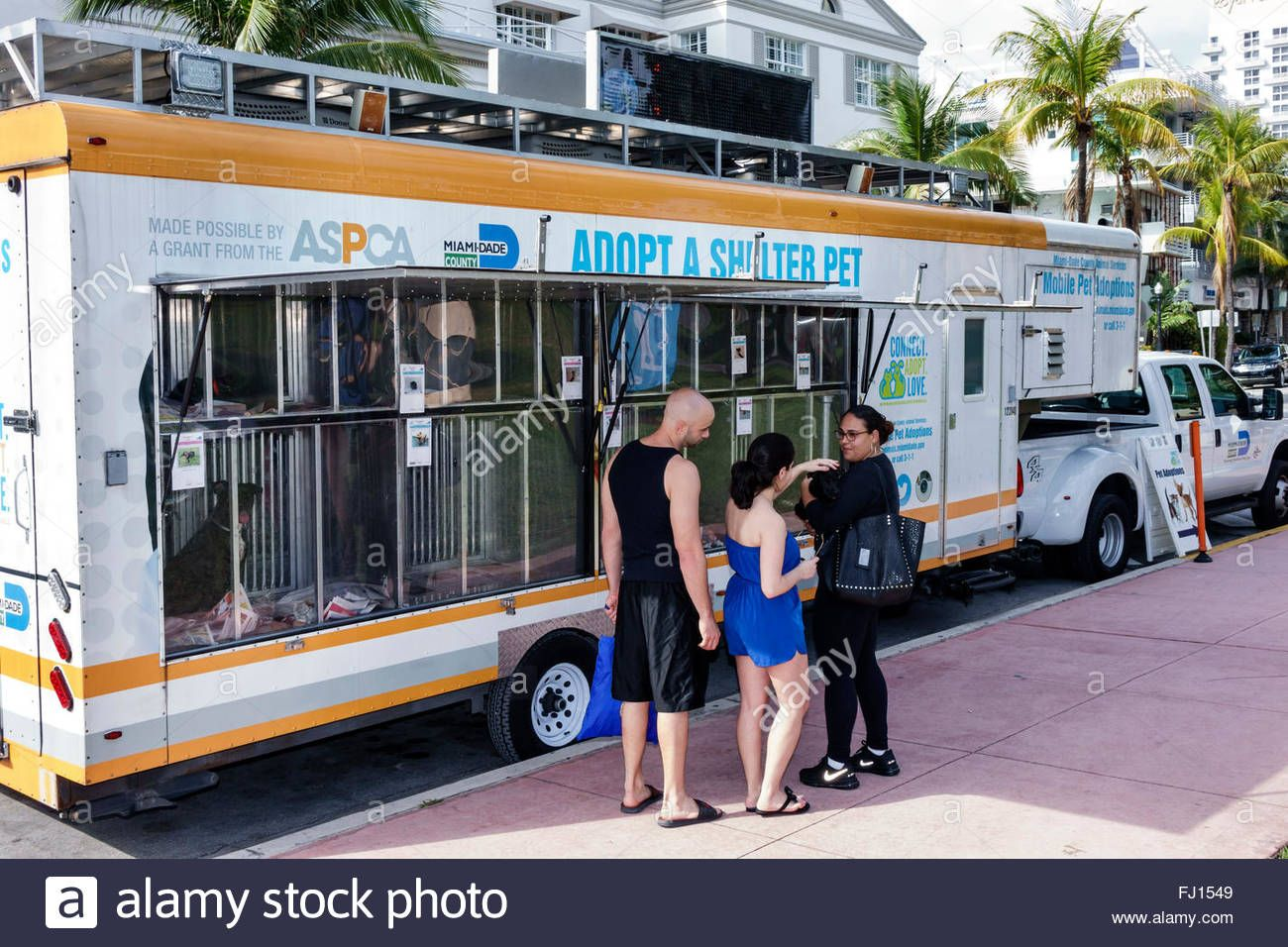Download This Stock Image Miami Beach Florida Mobile Adopt Animal Shelter Pet Trailer Adopting Man Woman Couple Lookin Pet Trailer Animal Shelter Pet Adoption