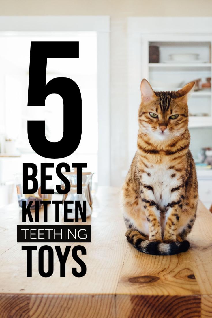 Top 5 Best Kitten Teething Toys In 2020 Kitten Teething Toys Teething Toys Cat Stuff Products