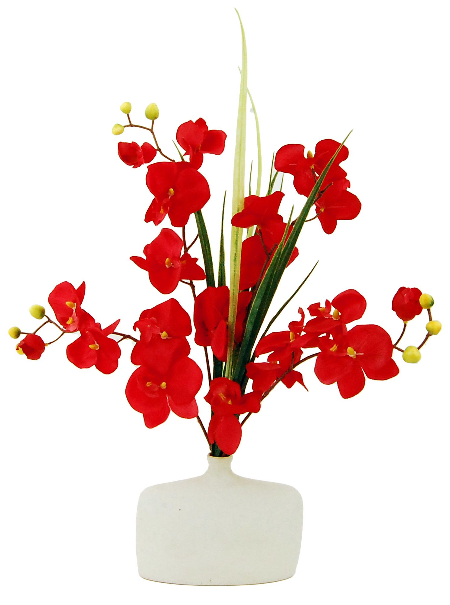 Phalaenopsis Orchids in Ceramic Pot
