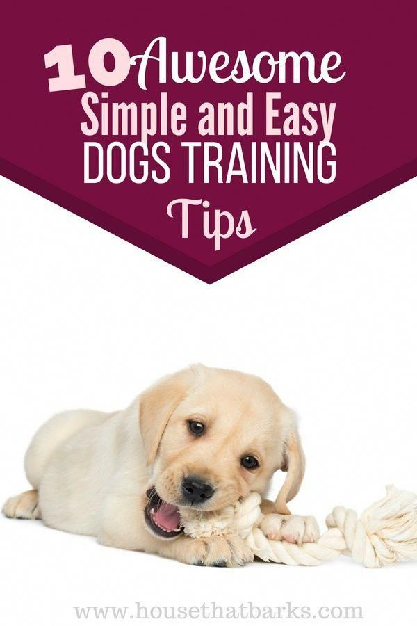 It Also Includes Teaching Your Canine Self Discipline Specifically