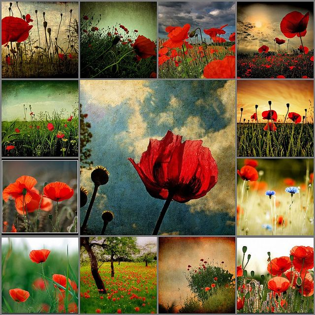 Remembrance Day Poppy Fields And Soldier Armistice Fridge Magnet