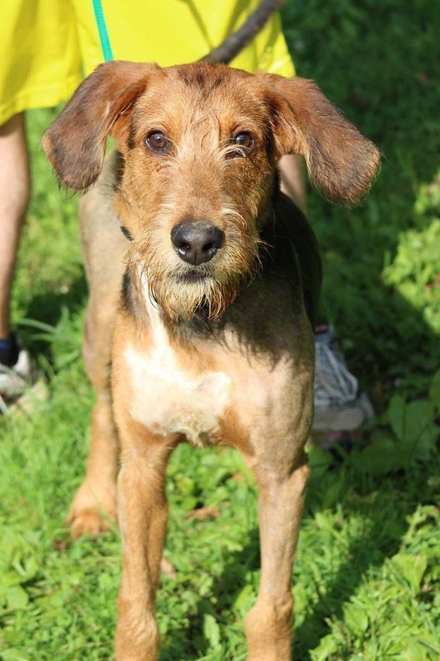 om Petty is looking to find a friend and a forever home