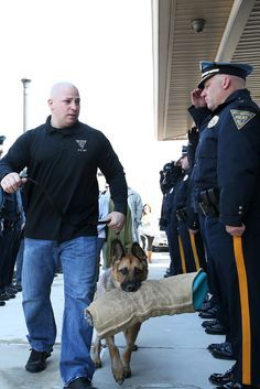 Police Salute Retired K-9 Officer On His Final Journey To Animal Hospital