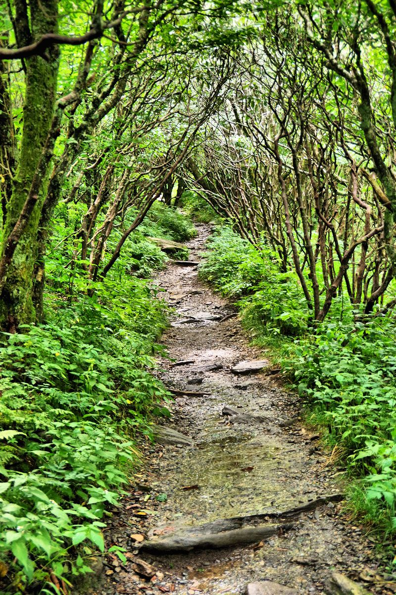 Craggy Gardens Trail On The Blue Ridge Parkway Near Asheville, NC.