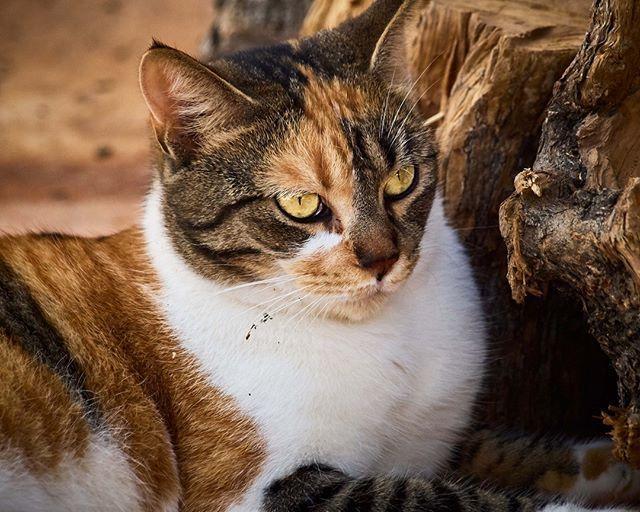 The cat is the only domestic animal not mentioned in the Bible. #katzenliebe #katzenglück #katzenfreunde #katzenfoto #hauskatze #katzenbabys #katzenaufinstagram #katzenliebhaber #katzenfotografie #katzenwelt #katzenspielzeug #catlovers #cat_features #catlife #catloversclub #catstagram #catsofinstagram #catsoftheworld #catsoftheday #catworld #cats #katze #katzen #cat #catlover #catlovers #catofinstagram #adorable #qchefscats