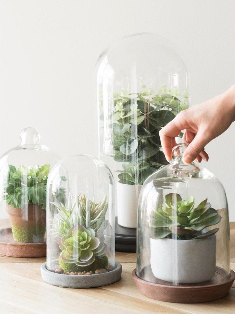 Conteneur De Terrarium Pour Plantes Grasses Vitrail Cache Pot