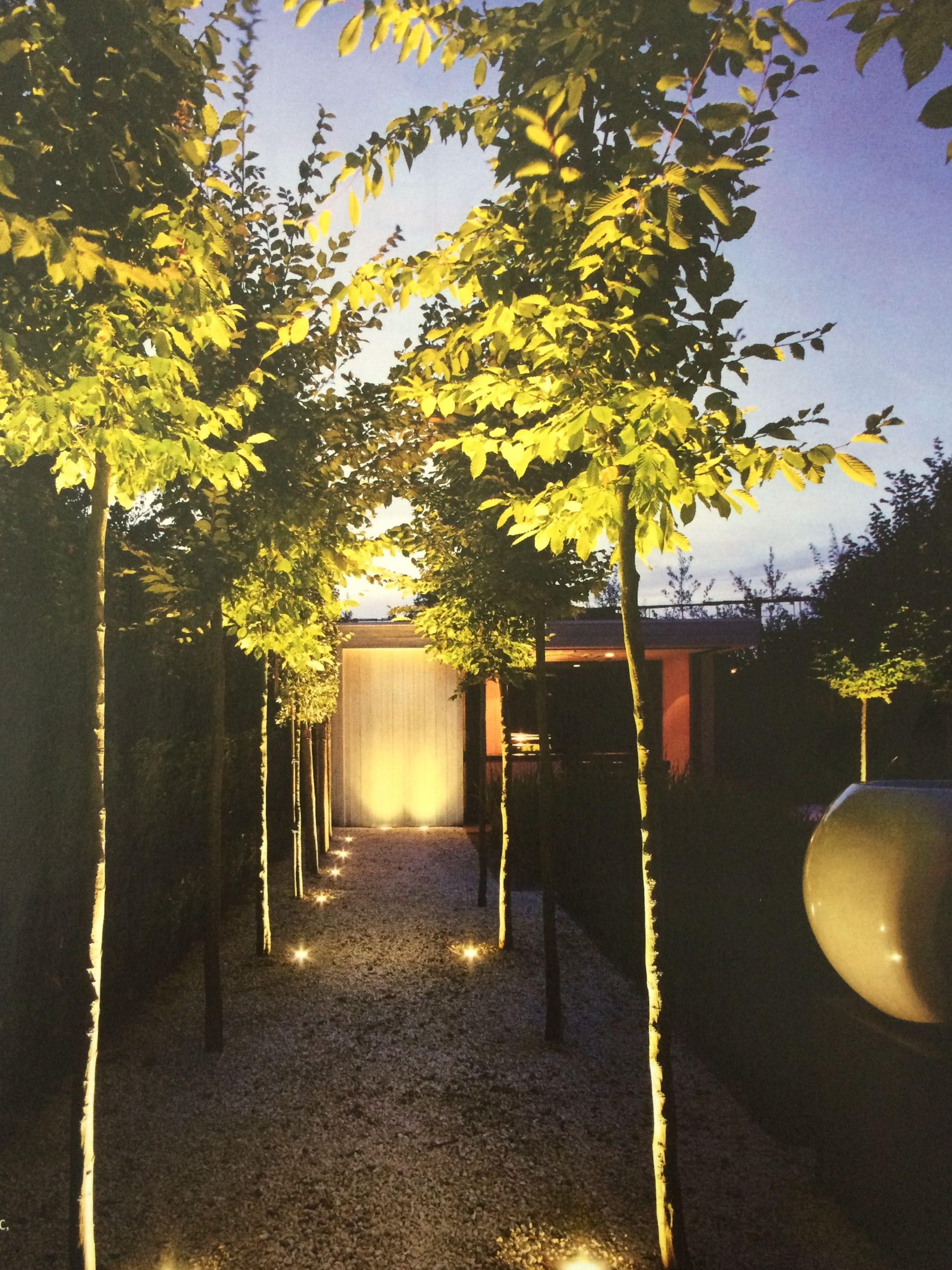Tuinpad verlichting