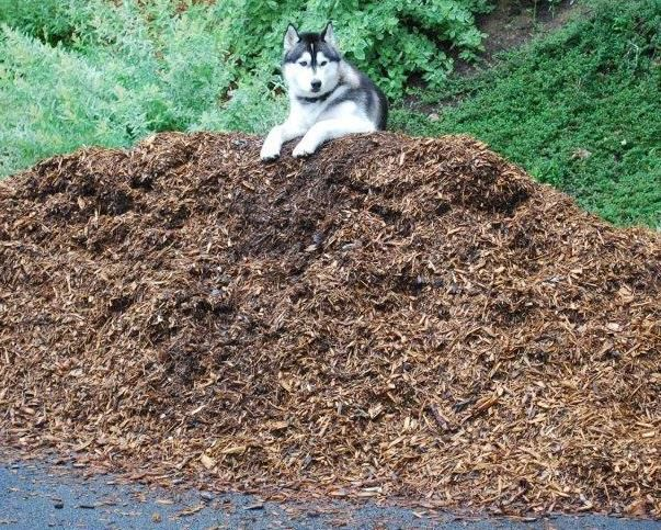 Choosing a Mulch for Pet Owners #Dogs #Mulch
