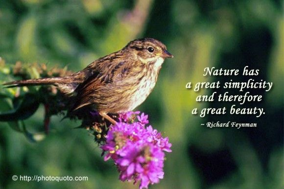 Beautiful Nature Quotes And Sayings About Life