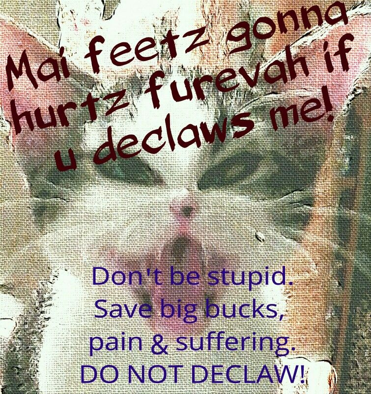 Dont be stupid declaw