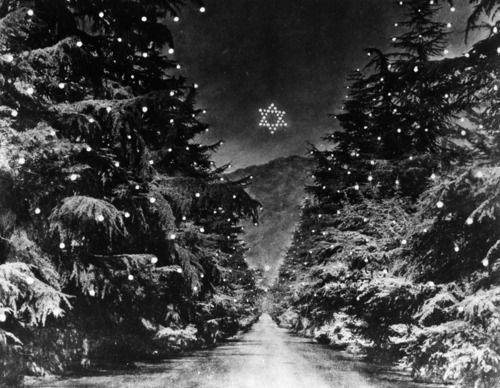 Christmas Tree Lane Altadena Ca