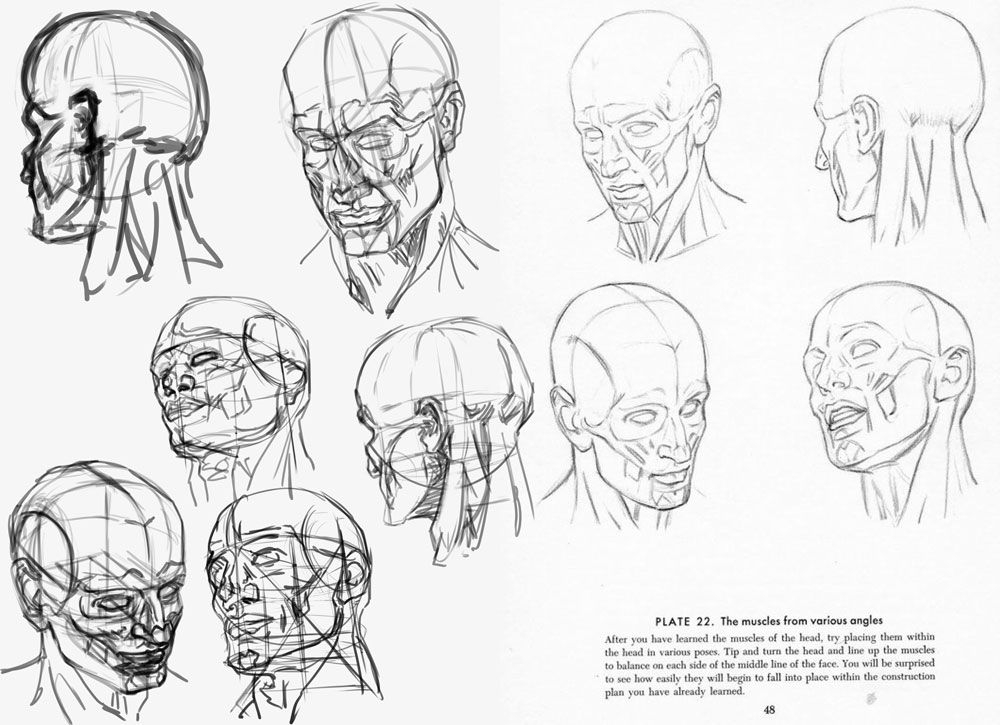 How to draw the male head anatomy - Andrew Loomis tutorials 2014 (2 ...