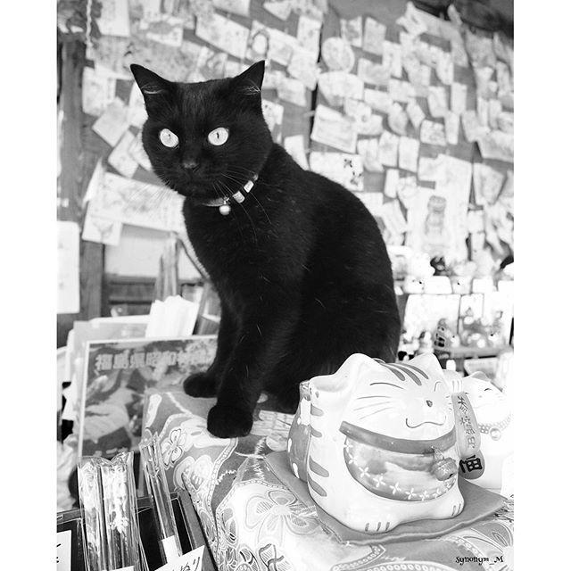 . . . . ✴︎ 福島で出会った 看板猫さん ✴︎ . . あ〜 また会いたいな〜✨ . . 福島 楽しかったな〜🎶 . . . #icujp_lovecatday25 . .