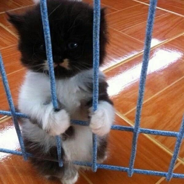 Please let me out, I'll be good.  Please!!!
