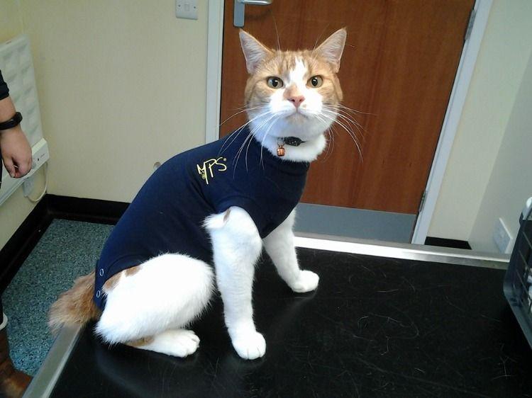 Medical Pet Shirts Pet Shirts Cat Post Pets
