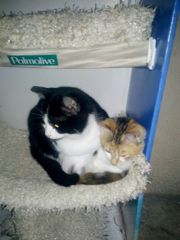 2 cats 1 box