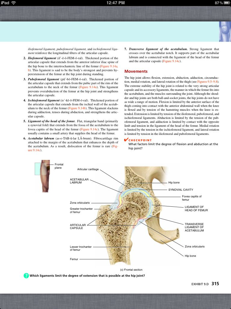 Principles of Anatomy and Physiology, Chapter 9, Joints, 27, book pg ...
