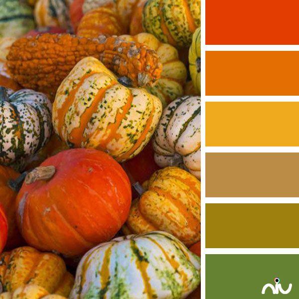 Pumpkins Color Palette