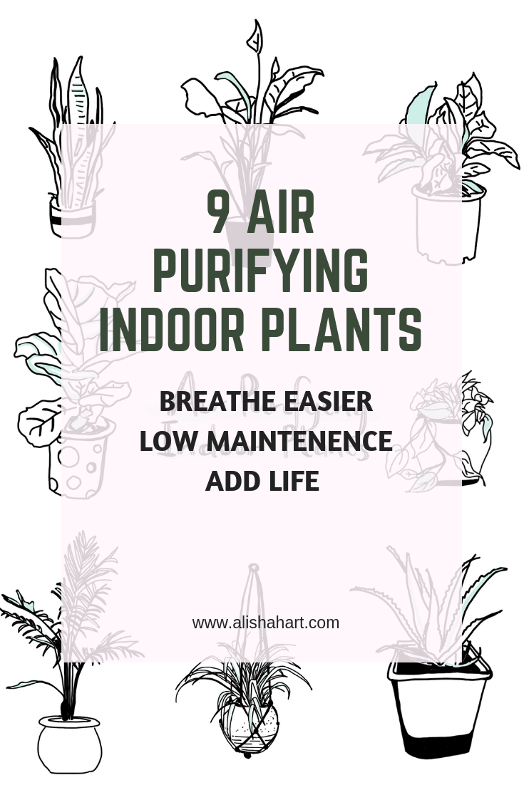 air purifying indoor plants alishahart wellness indoor plants