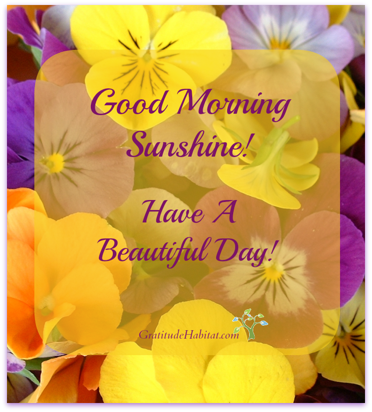 Have A Beautiful Day Good Morning Sunshine Morning Blessings Good Morning Quotes