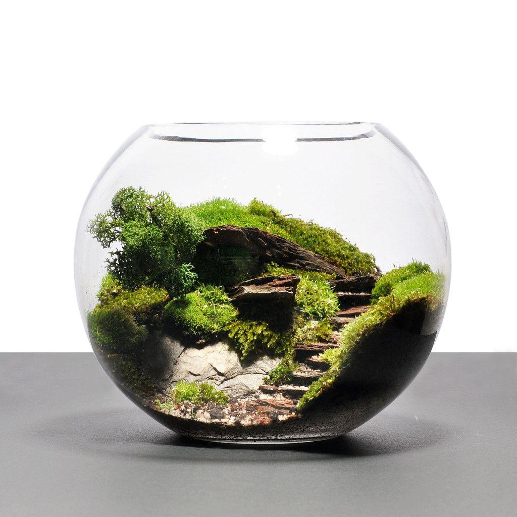 miniature terrarium dream home pinterest terraria miniatures and gardens. Black Bedroom Furniture Sets. Home Design Ideas
