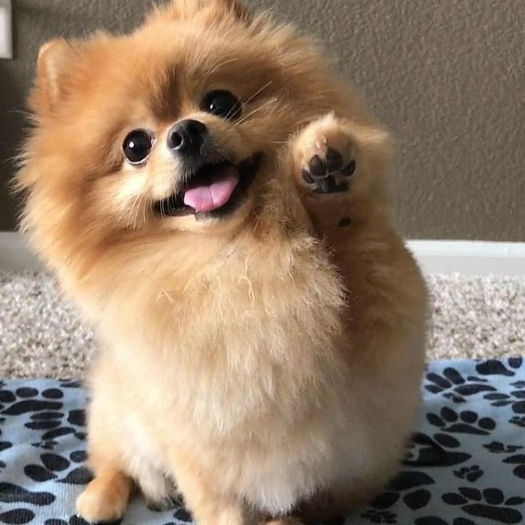 cutest picture of pom