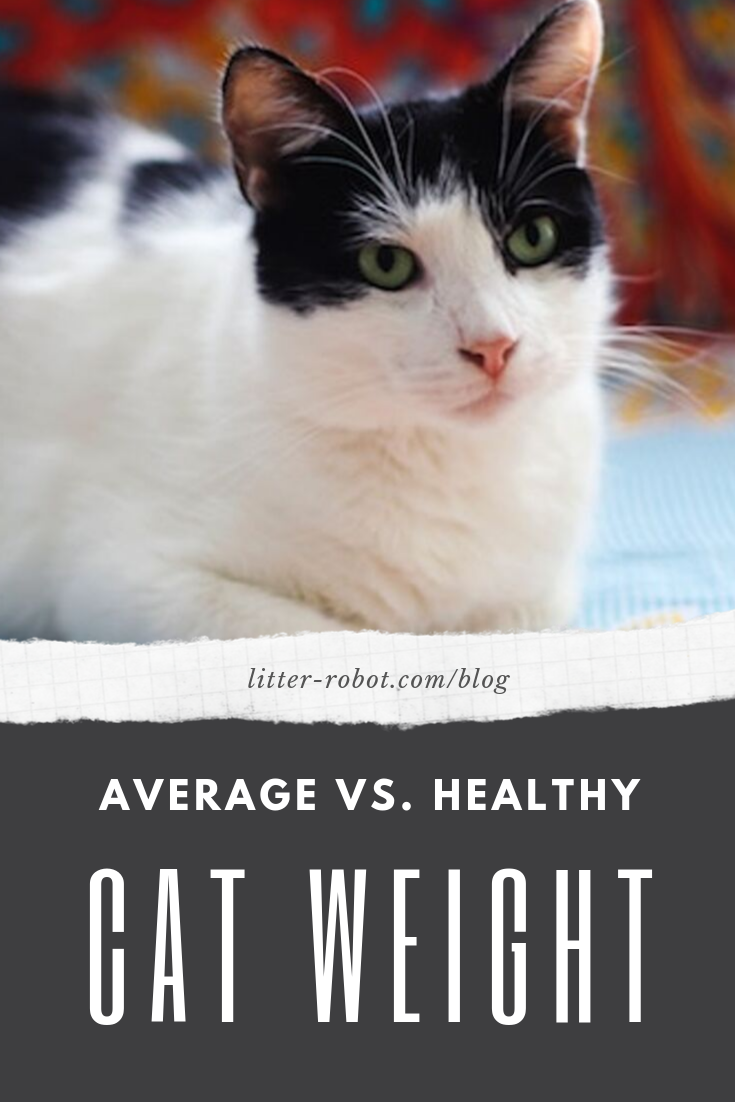 Find Out Where Your Cat Falls On The Spectrum And What You Can Do If Your Cat Is Overweight Cats Healthy Cat Obese Cat